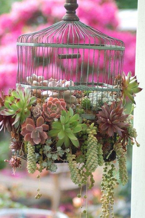 Aranajament floral in colivie pentru pasari