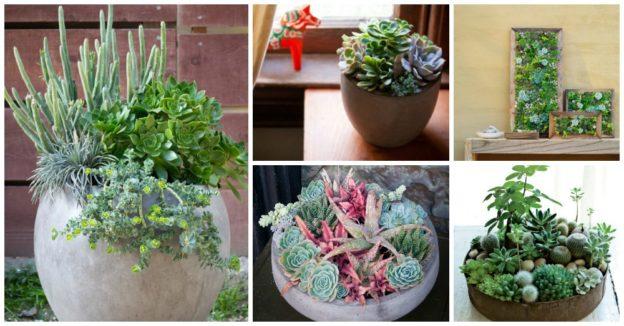 Aranjamente din plante suculente pentru casa