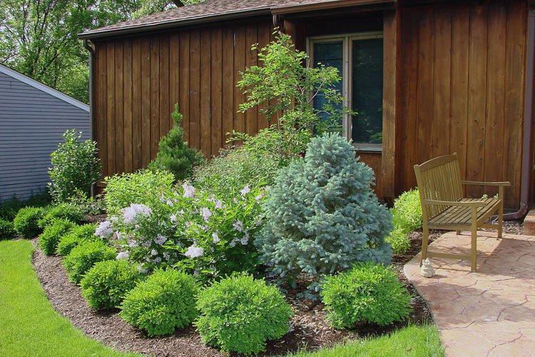 Arbusti mici in gradina