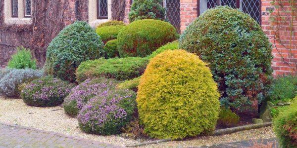 Arbusti ornamentali mici