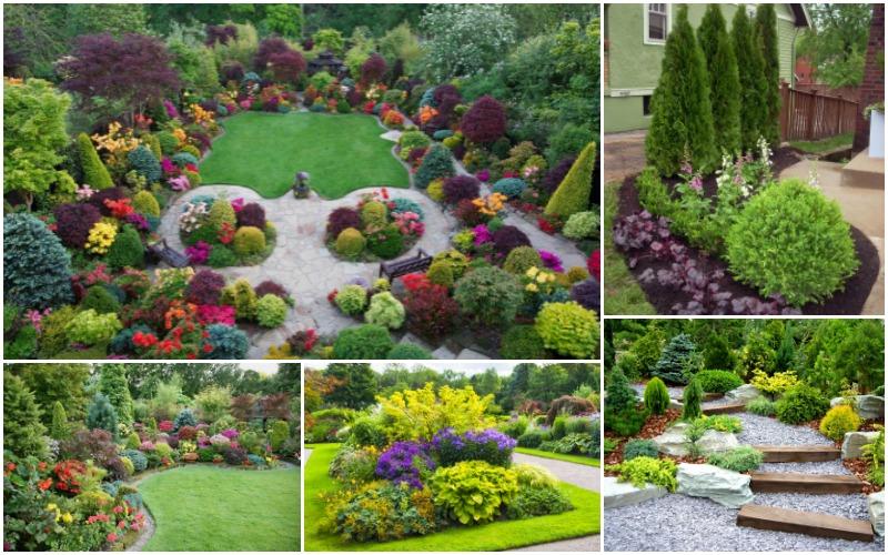 Arbusti ornamentali 15 gradini amenajate de vis for Arbusti ornamentali