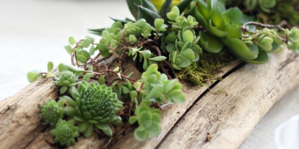 Decor lemn plante suculente