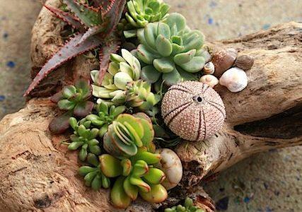 Decor plante suculente