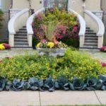 Decorare gradina cu flori si varza ornamentala
