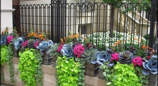 Decoratiune cu varza ornamentala si plante agatatoare