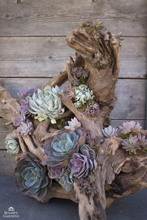 Decoratiune plante suculente