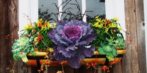 Glastra cu varza ornamentala si flori colorate