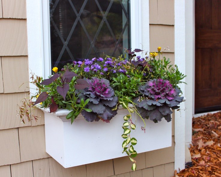 Glastra cu varza ornamentala si flori