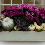 Glastra cu varza si flori violet