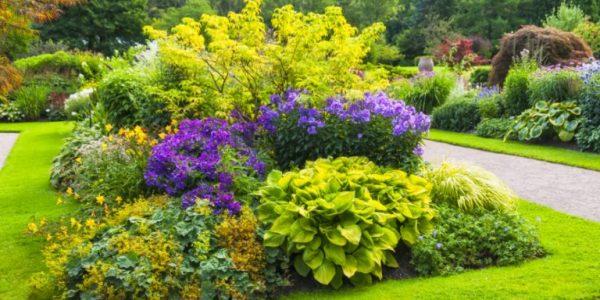 Gradina cu arbusti