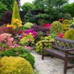 Gradina cu flori si arbusti colorati