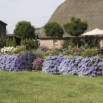 Gradina cu flori si arbusti ornamentali