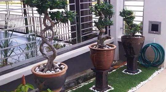 Gradina mica cu plante ornamentale