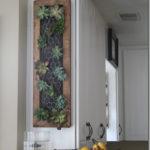 Gradina verticala dining plante suculente