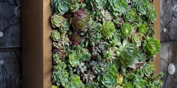 Gradina verticala plante suculente