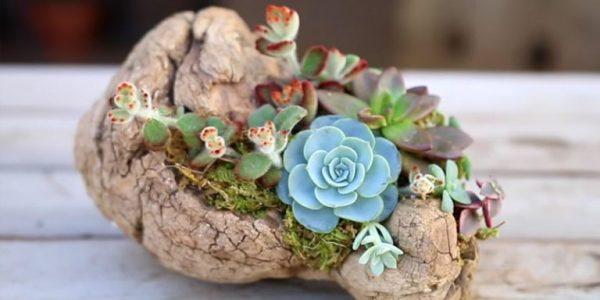 Mic decor plante suculente