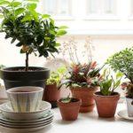 Pervaz cu diferite plante decorative