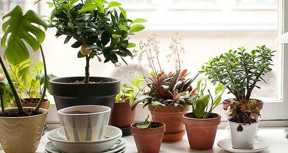 Plante decorative for Plante decorative exterieure