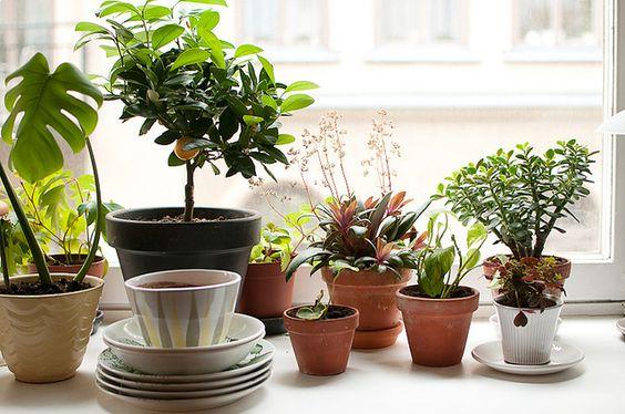 Pervaz cu diferite plante decorative Plante decorative