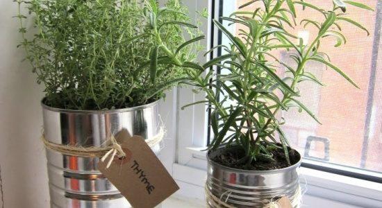 Pervaz cu plante aromatice