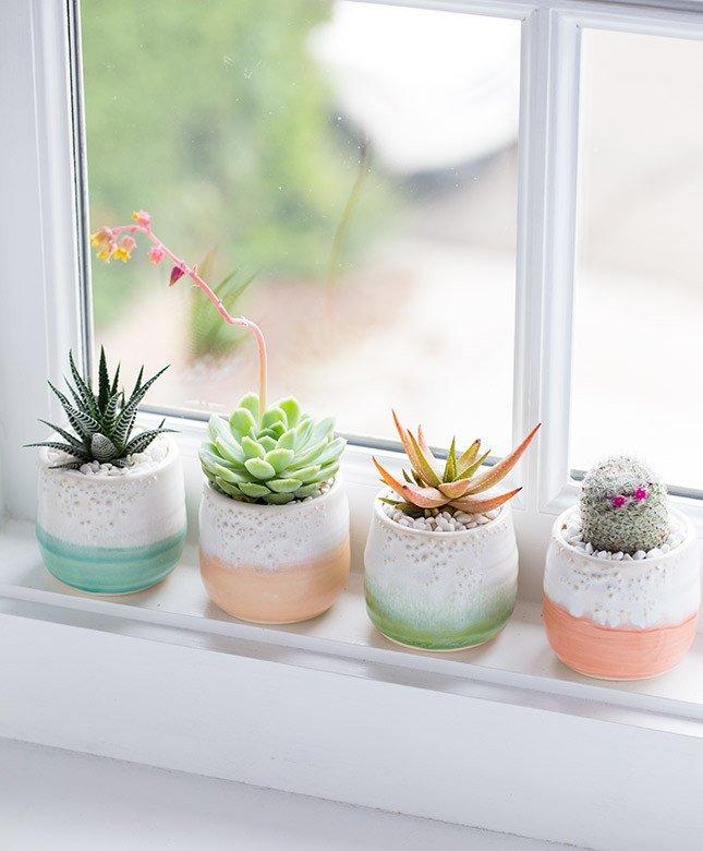 Pervaz cu plante mici