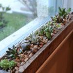 Pervaz cu plante suculente