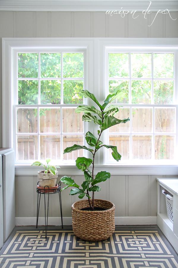 Planta decorativa mare