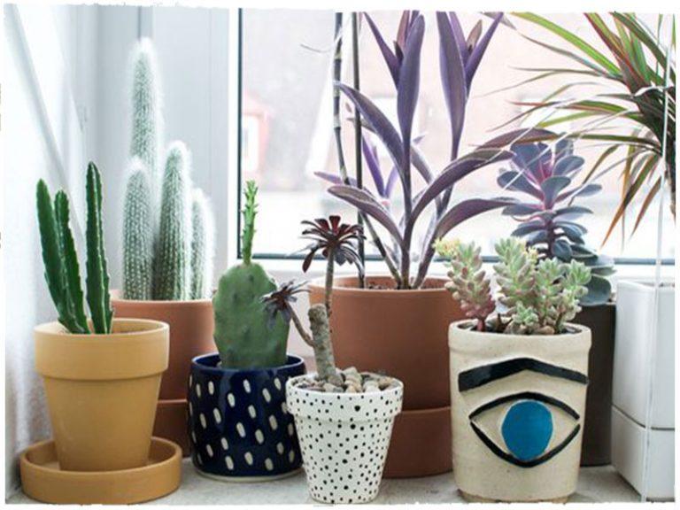Plante decorative pe pervaz