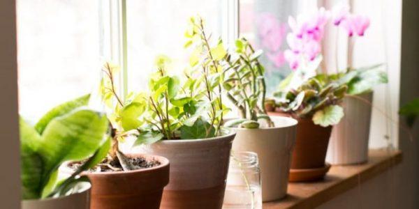 Plante frumoase pe pervaz