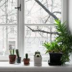Plante pe pervaz