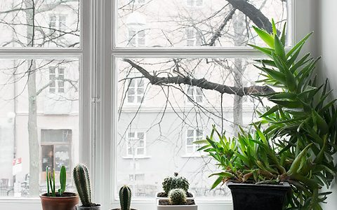 Plante decorative for Plante x ragnarok