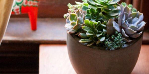 Plante suculente in vas