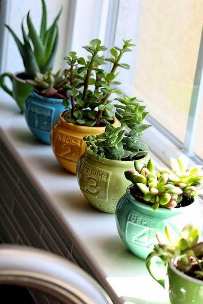 Plante suculente pe pervaz