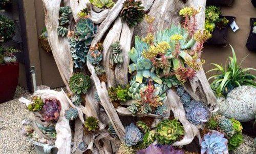 Plante suculente plantate in lemn