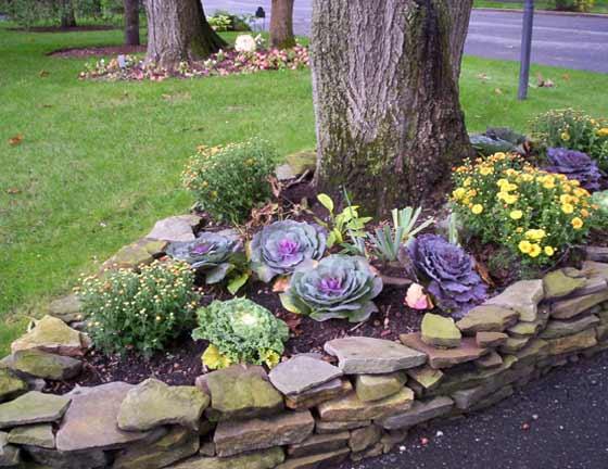 Rond de flori si varza ornamentala