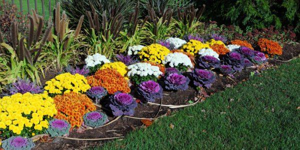 Straturi de flori si varza ornamentala