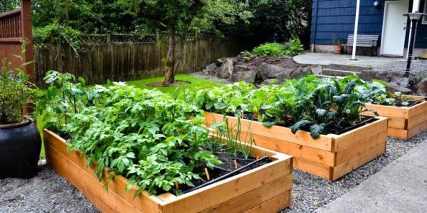Straturi etajate legume