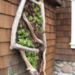 Suport vertical plante suculente