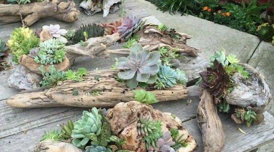 Suporturi din trunchiuri de copaci pentru plante suculente