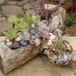 Trunchi cu plante suculente