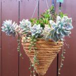 Vas de flori agatator infasurat cu franghie
