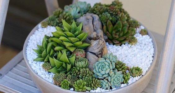 Vas plante suculent cu pietris