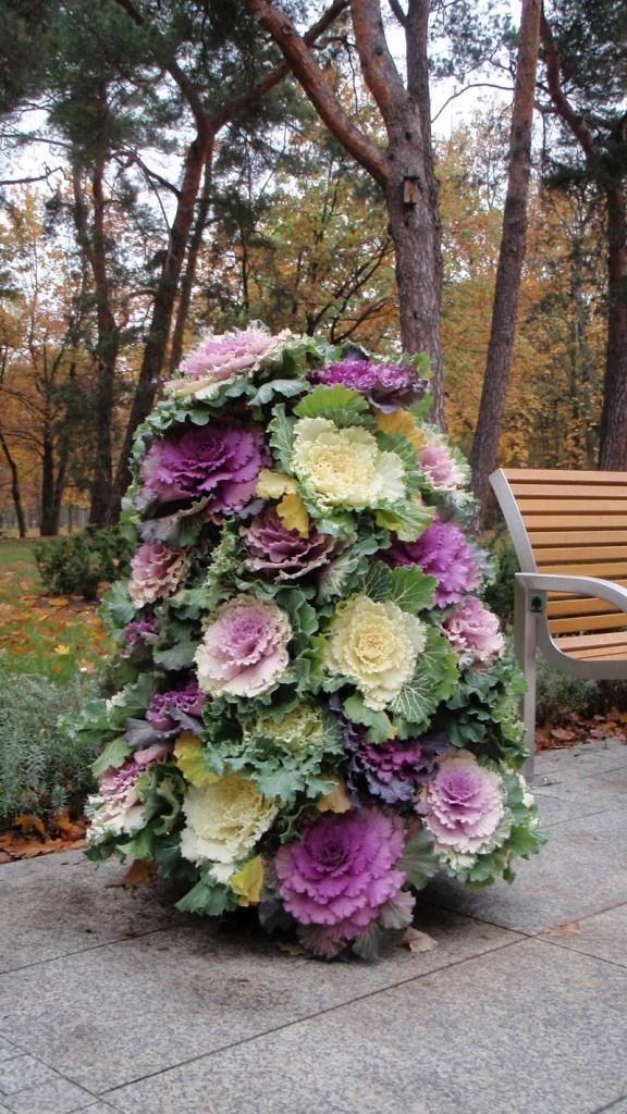 Varza ornamentala multicolora decor gradina