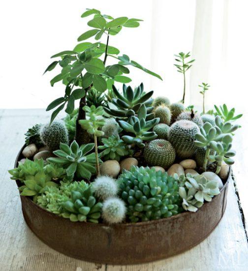 Vas cu diferite plante suculente