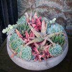 Vas cu plante suculente multicolore
