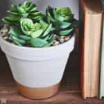 Vas plante suculente cu pietre