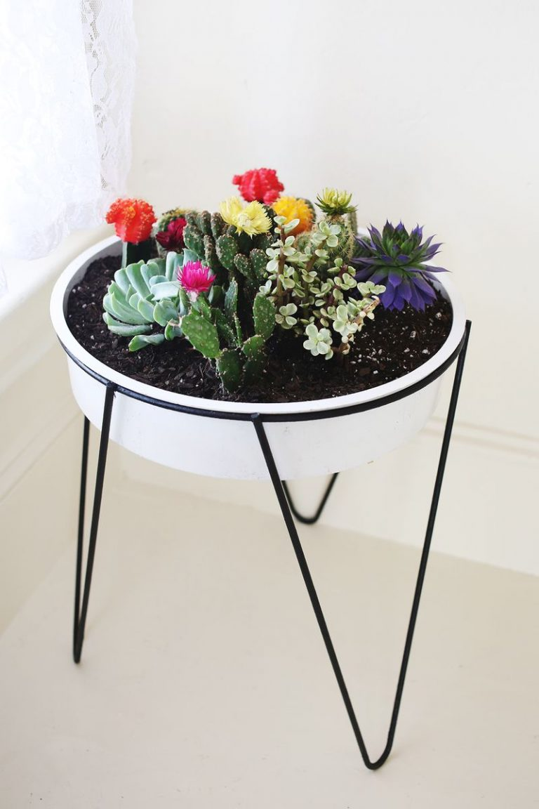 Vas mic cactusi colorati