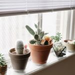 Vase cu plante pe pervaz