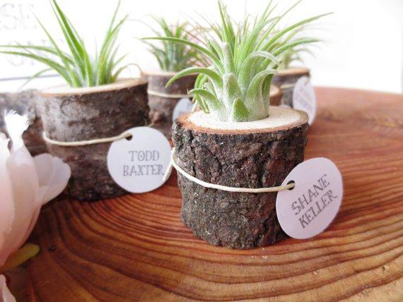 Vaze mici din ramuri de copac