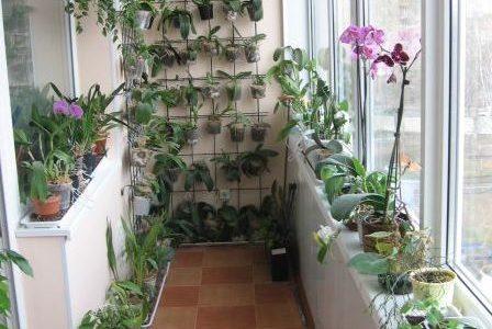 Balcon cu multe flori